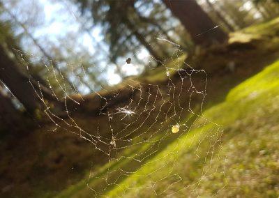 Spinnennetzk